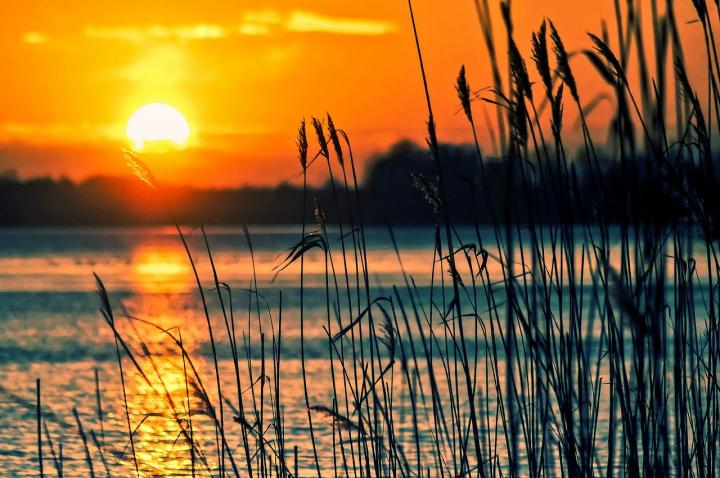 Sunset at Lake with Reeds